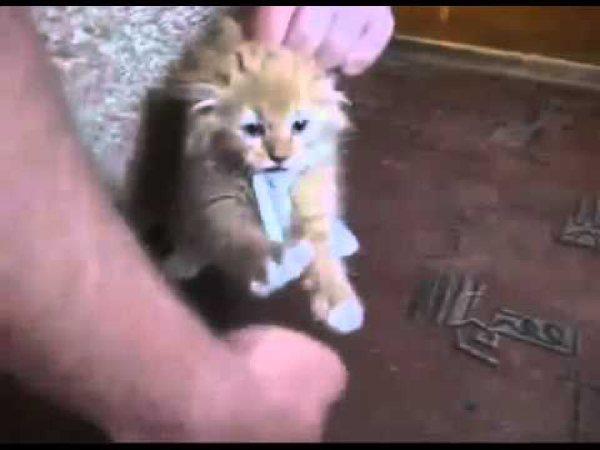 Maltratan a un gato metiéndole un cigarrillo encendido en la boca